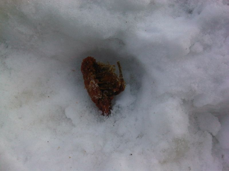 Chicken Bone in Snow